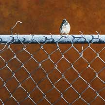 Can't Fence Me In by Cindy Taplin